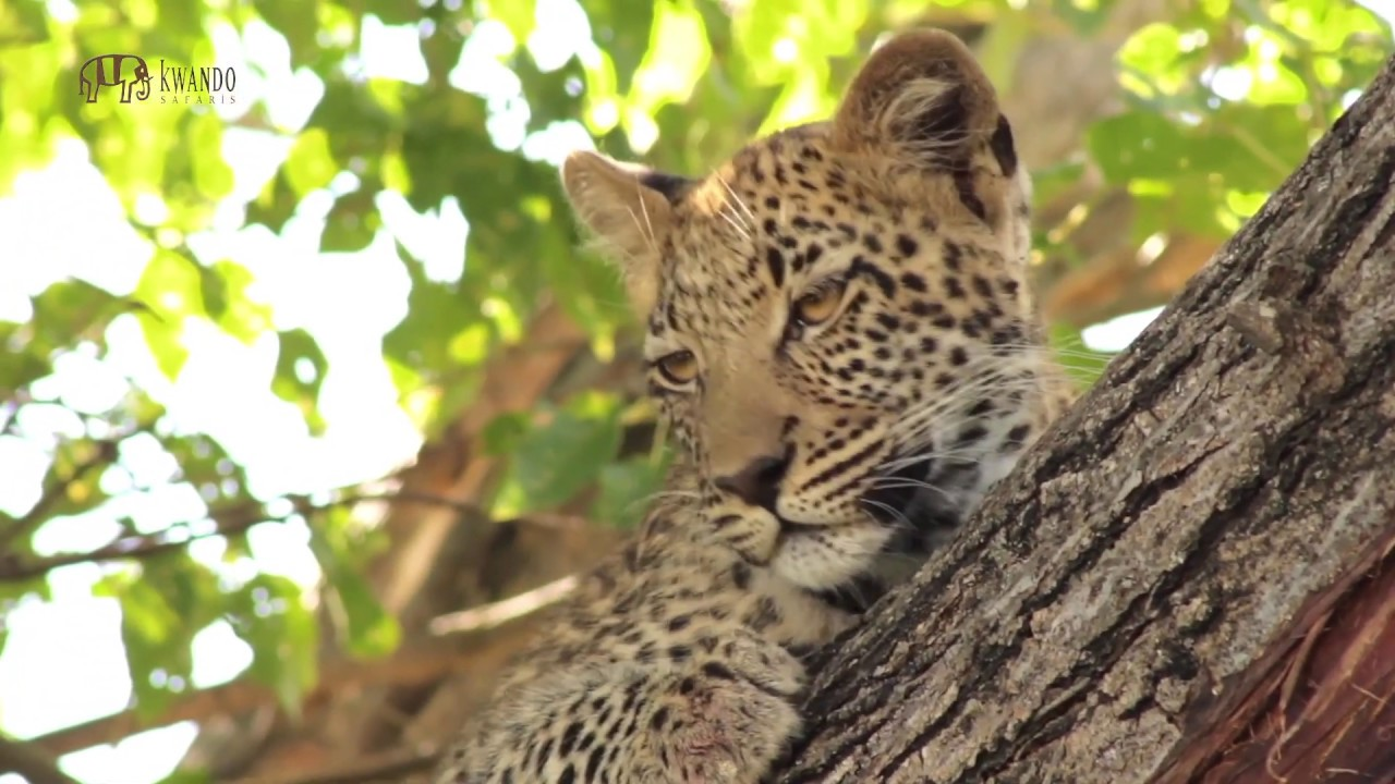 Splash Camp, Okavango Delta, Luxury Safaris