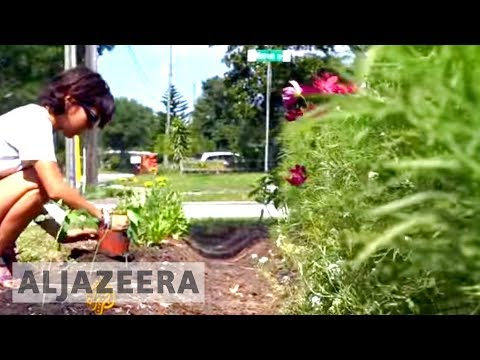 US homeowners turn lawns into organic gardens
