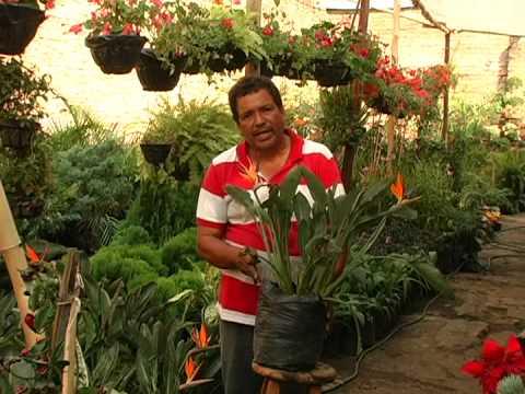 Jardineando febrero 08 plantas exoticas youtube for Plantas exoticas de interior