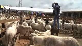 Société: la foire du mouton est lancée pour la Tabaski