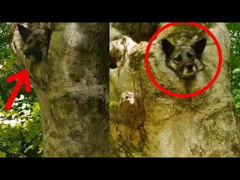 Мужчина услышал крики в лесу и решил посмотреть что там… Такого он еще в жизни не видел!..