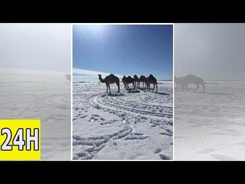 La neige tombe… au sahara | brèves | alterinfonet.org agence de presse associative
