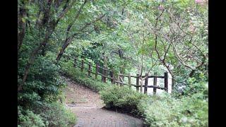 자연의 소리 뻐꾸기와 아름다운 새소리 sound nature