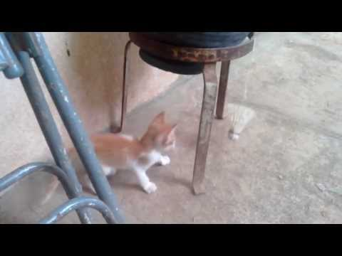 Video taken with Micromax Canvas Music A88 in cloudy ambiance
