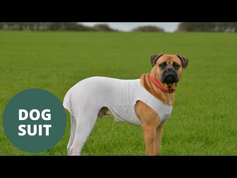 first dog to have life saved using pioneering protective suit