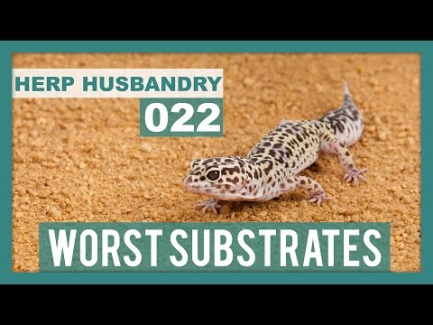 6 Worst Substrates & Beddings for Reptiles You Should Avoid