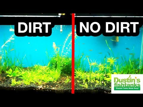 DIRT VS NO DIRT PROOF Planted Tank Substrate Time Lapse Of Growth