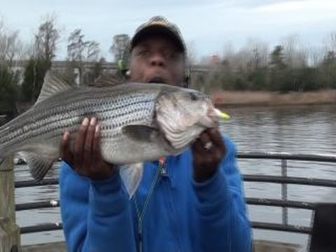 Video James river catfish