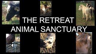 The Retreat Animal Sanctuary