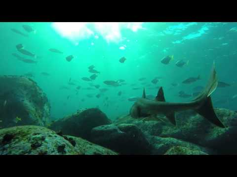 Terrigal - Beneath the Surface (Sharks, Dolphins, Humpback Whale, Bull Rays and more!)