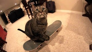 CAT SKATEBOARDS FOR THE FIRST TIME!