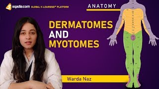 Dermatomes and Myotomes | Human Anatomy Lecture | Medical V-Learning Courses