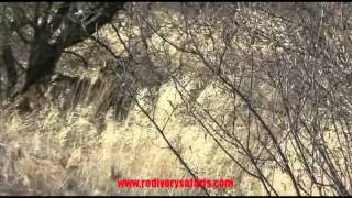 red ivory safaris show reel 2015 you tube clip