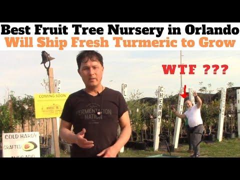 Best Fruit Tree Nursery in Orlando will Ship You Organic Turmeric to Grow or Eat