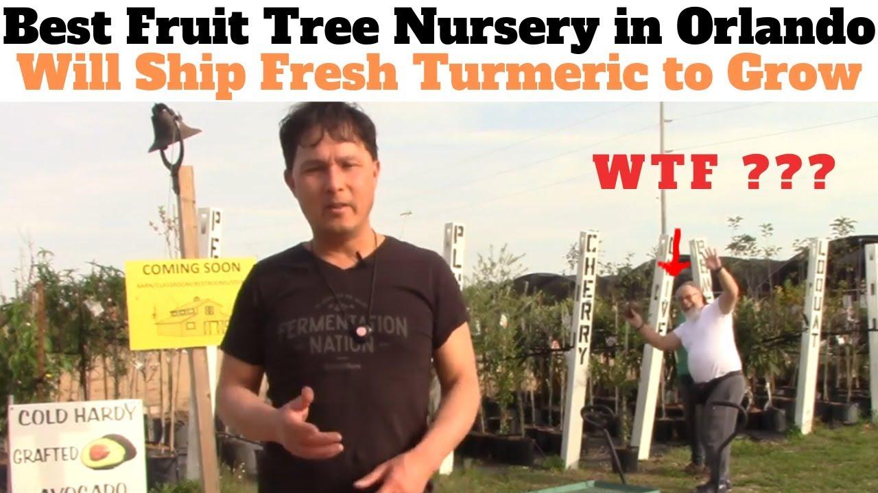 Best Fruit Tree Nursery In Orlando Will