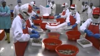 The shrimp farmers of Bangladesh UNIDO (en)