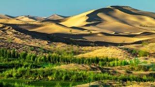 Desert Greening - Madjid Abdellaziz bei SteinZeit