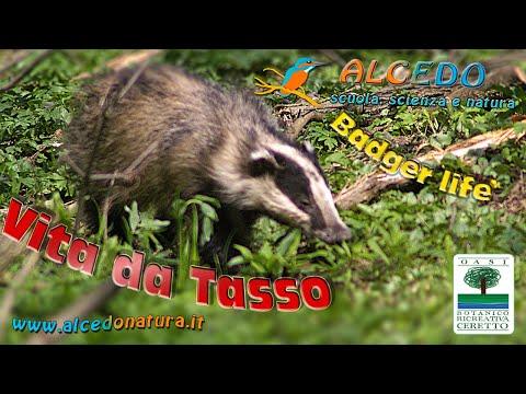 Vita da Tasso