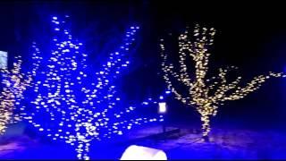 Рождественское освещение Миллениум парк
