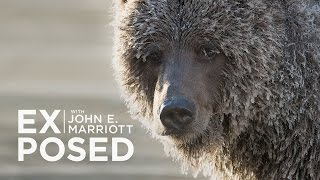 EXPOSED Ep. 7: Wildlife Photography | Ice Grizzlies of the Yukon