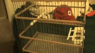 Custom Made Songbird Wood Cage