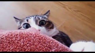 Собака, кошки и огурцы. (Dog, cat and cucumbers.} Урок для кошек.