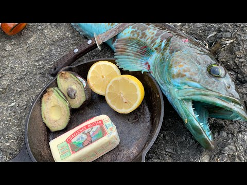 BLUE MEAT Lingcod! Catch + COOK ON THE ROCKS