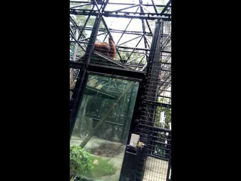 Hong kong zoological and botanical gardens part 2