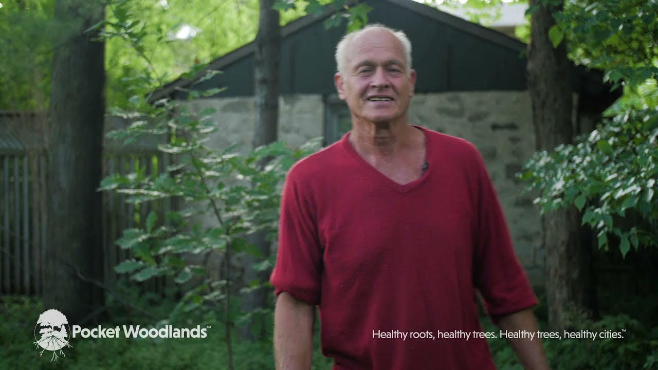 A New Way To Grow Healthy Trees Video Series
