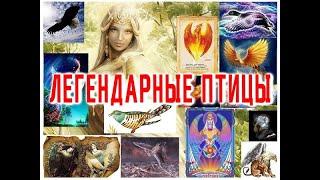 ТОП -10 Легендарных Чудо Птиц / Виктор Максименков