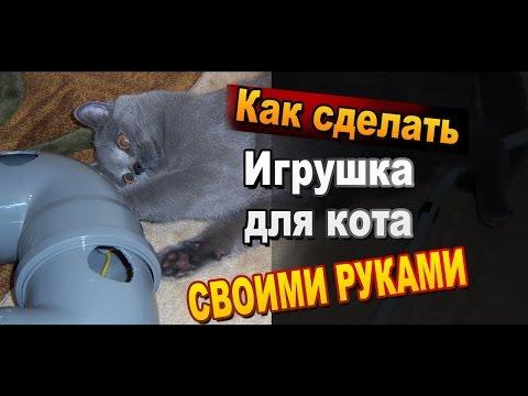 видео: Игрушка для кошки своими руками из доступных деталей / Самоделки sekretmastera
