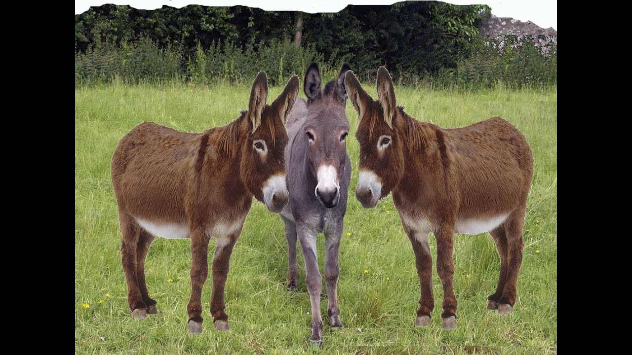 Image result for donkey images