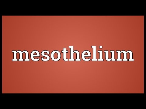 Header of mesothelium