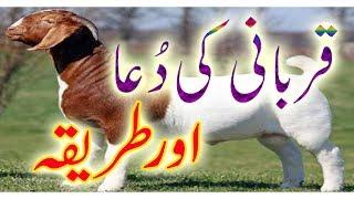 Qurbani Ki Dua & Tarika (EID Ul Azha)| Qurbani Ka Janwar Zibah Karnay Say Pehlay Ki Dua