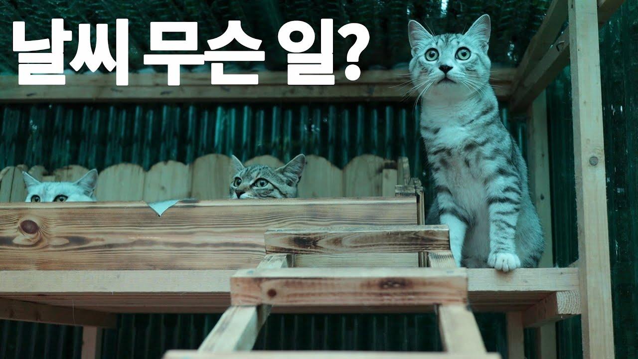 폭우 쏟아지던 날에 산골 고양이들(feat.천둥소리)