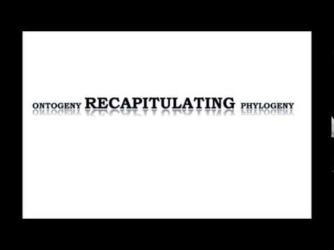 Ontogeny Recapitulating Phylogeny