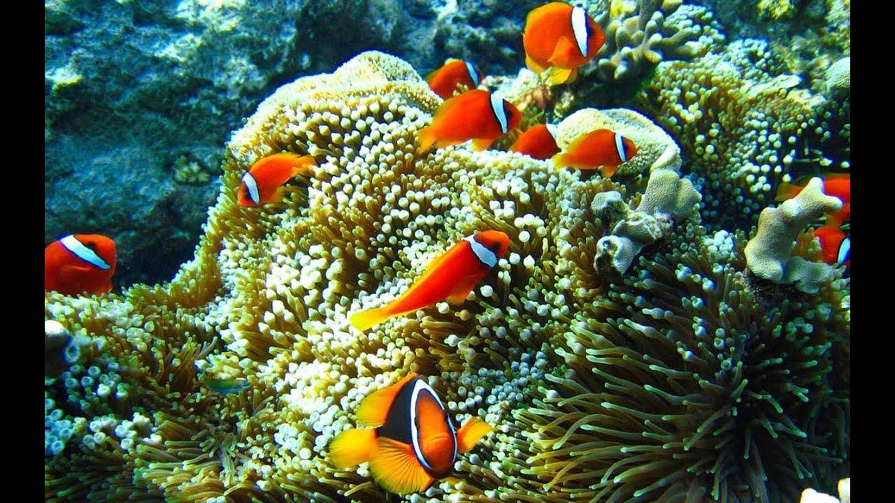 خلفية حوض أسماك متحركة للأندرويد Aquarium Live Wallpaper Pro تحميل مجاني