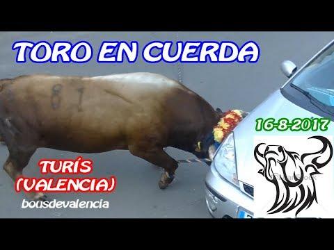 TURÍS (V) 2017 - TOROS EN CUERDA CONTRA EL COCHE!!! CON MUCHO PELIGRO DE AGOSTO 2017