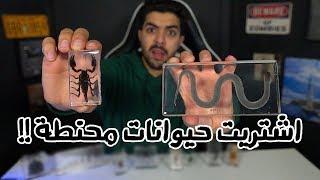 اغرب الاشياء اللي ممكن تشتريها من الانترنت   نسخة الحيوانات المحنطة !!!