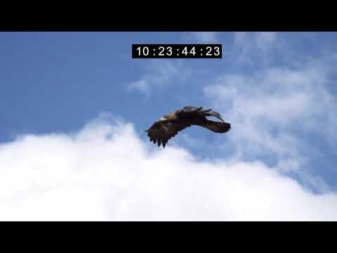 Vidéo WILDLIFE EAGLE