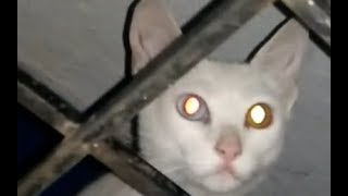 Scary cat video   watch on your own risk