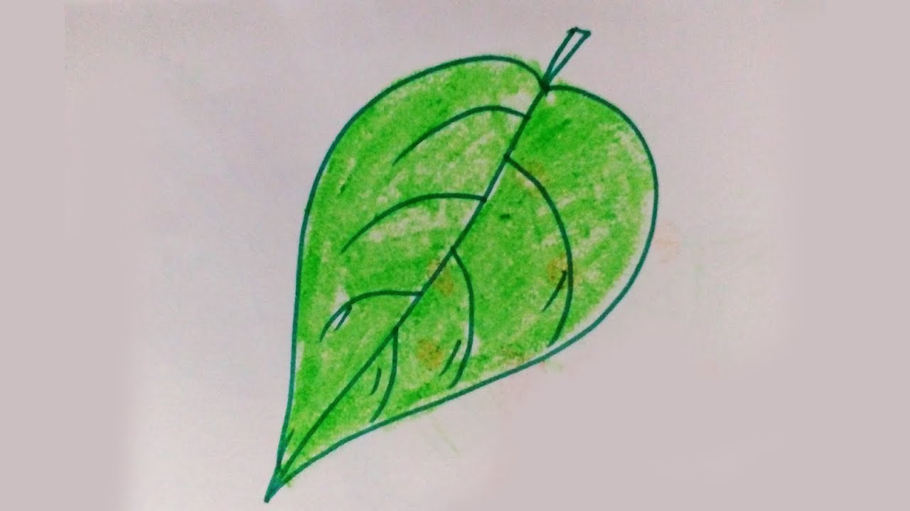 How to draw a green leaf easy drawing for kids kids drawing video