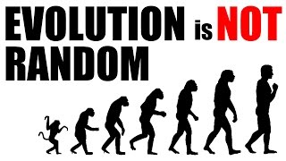 Gambar cover A short explanation of why Evolution is NOT Random