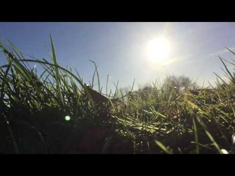 Nature Video Wallpaper- Sunshine, Grass, Blue Sky 1080p 60FPS