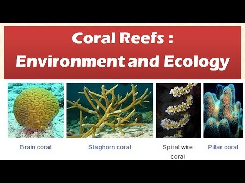 Coral reefs features types of coral reefs functions ecology and coral reefs features types of coral reefs functions ecology and environment publicscrutiny Gallery