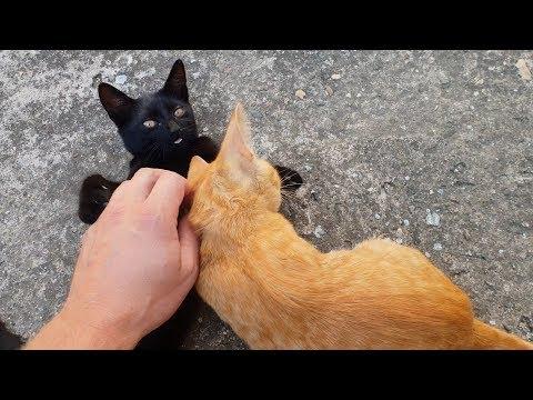 Kittens Love Petting