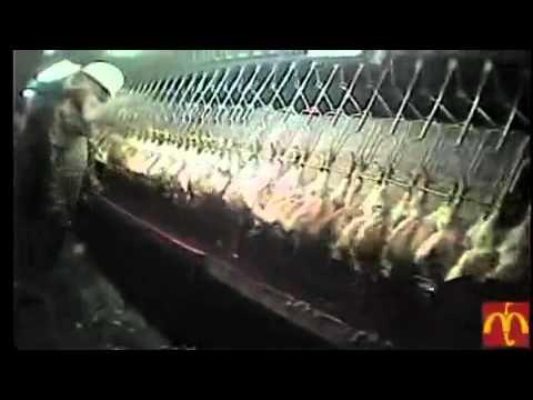 Essays on animal cruelty in slaughterhouses