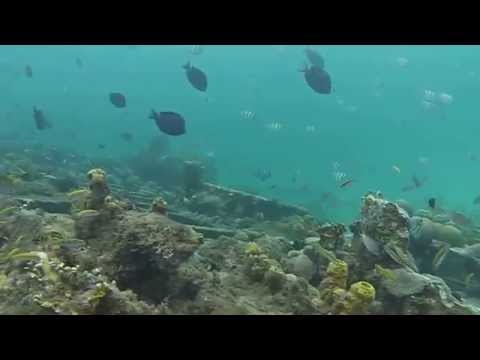 Shipwreck Snorkeling and Freediving in Barbados