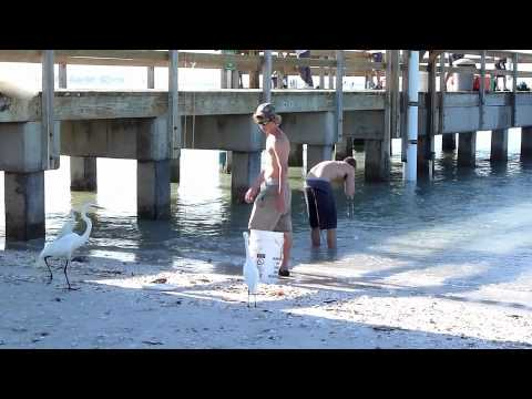 Bait catchers at the sanibel island florida fishing pier for Best bait for pier fishing
