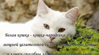 Как окрас кошки влияет на атмосферу в доме